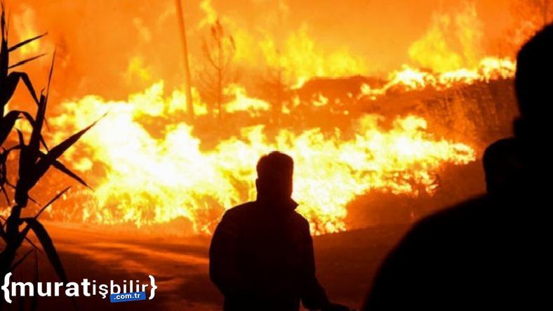 63 Orman Yangınından 42'si Kontrol Altına Alındı