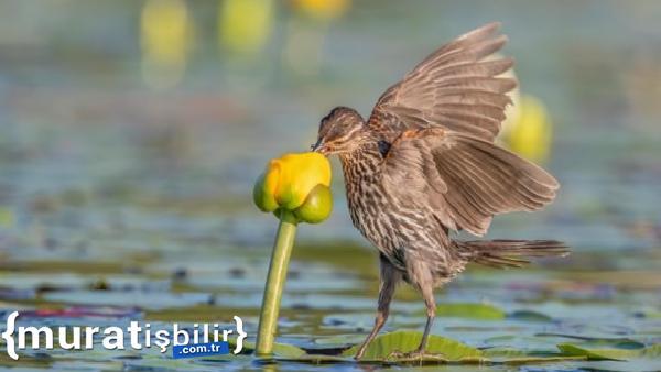Audobon Kuş Fotoğrafları Yarışması Açıklandı