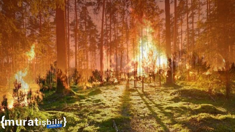 İzmir Valiliği Orman Yangınlarının Önüne Geçecek!