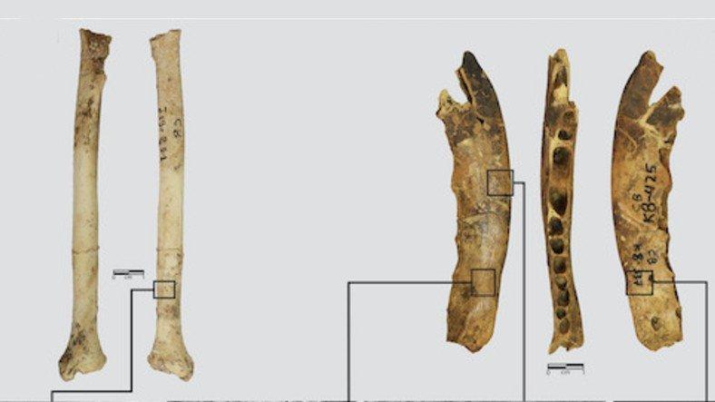 120 Bin Yıllık 'Kürk ve Deri Atölyesi' Keşfedildi