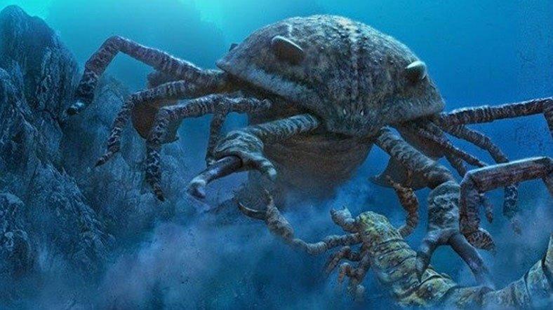500 Yıllık Antik Deniz Canlısı Keşfedildi