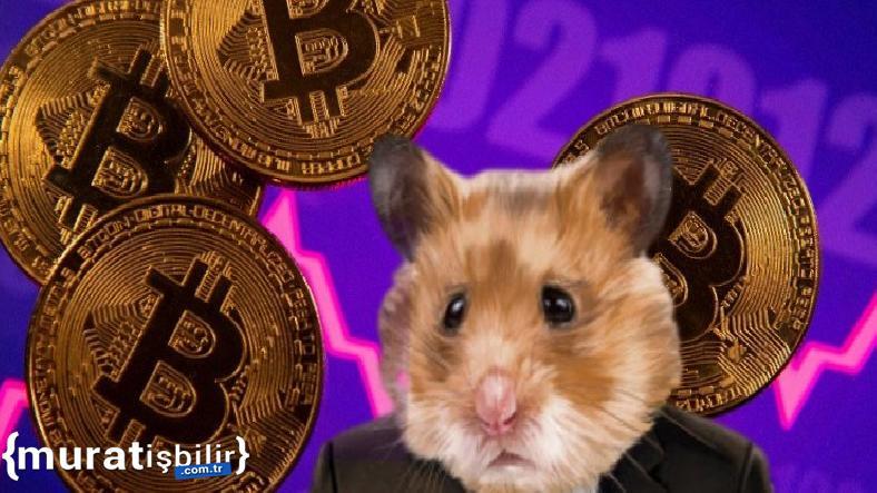Bir Hamster, Kripto Ticaretinde Devleri Geride Bıraktı