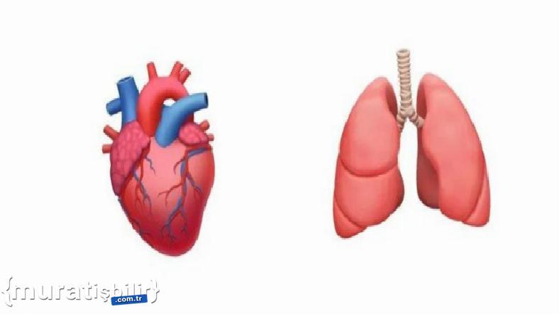 Doktorlar Daha Çok Organ Emojisi Olması Gerektiği Kanaatinde