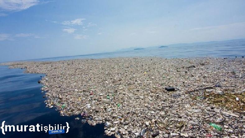 Kanada'da Balık Atıklarından Plastik Üretildi