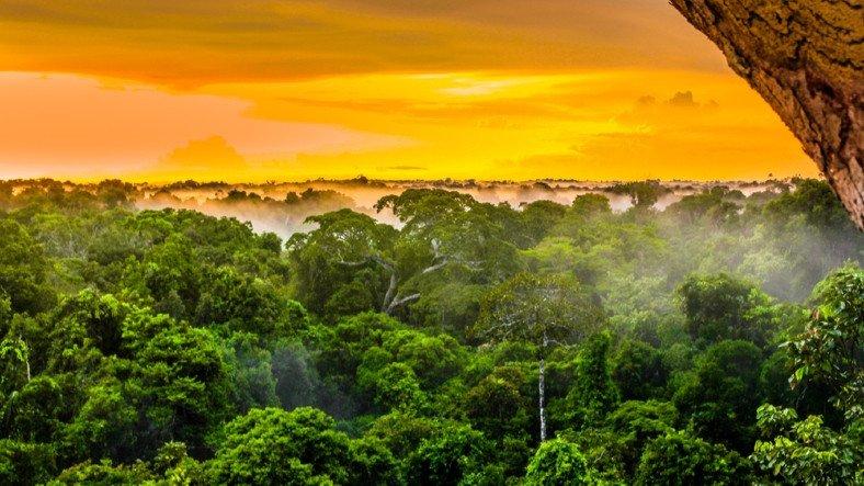 Amazon'da, 20 Yılın En Düşük Eylül Ayı Yangınları Kaydedildi