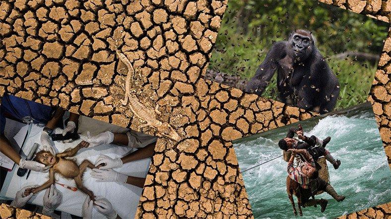 Doğa Koruma Vakfı Fotoğraf Yarışmasının Birincisi Belli Oldu