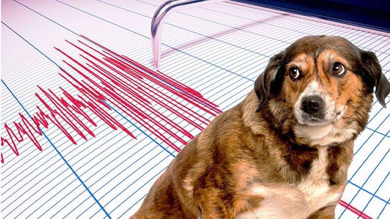 Hayvanlar Depremleri Önceden Sezebilir mi?