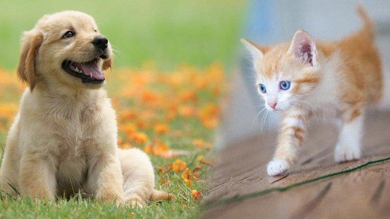 """""""Kediler mi Yoksa Köpekler mi Daha Zeki?"""" Araştırması"""